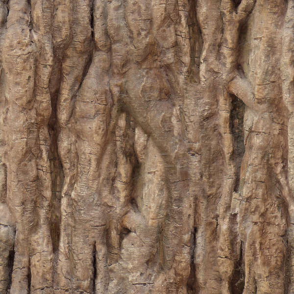 Barktropical0001 Free Background Texture Wood Bark