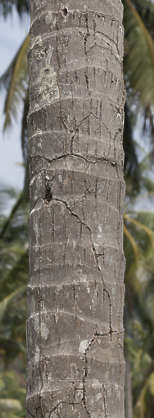 jungle tropical tree bark